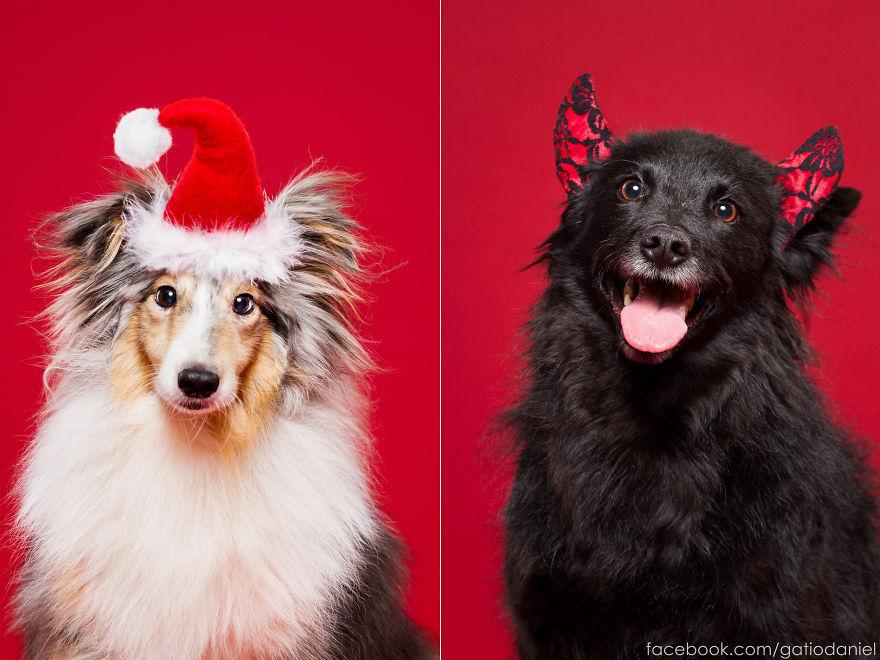Як виглядають найноворічніші собаки у світі - фото 5