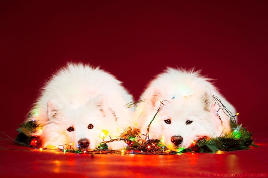 Як виглядають найноворічніші собаки у світі - фото 1
