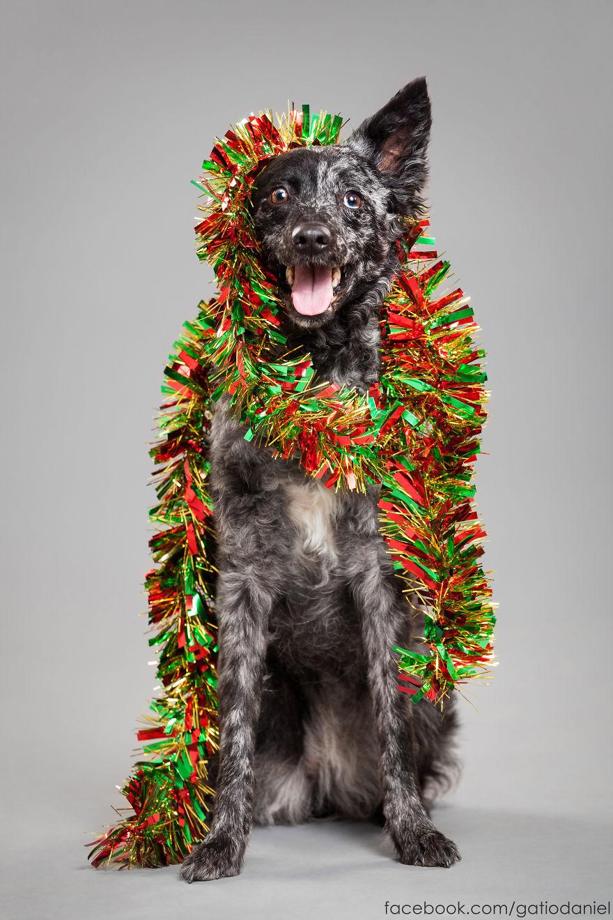 Як виглядають найноворічніші собаки у світі - фото 2