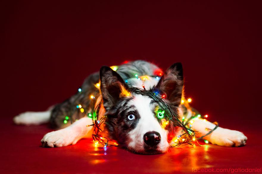 Як виглядають найноворічніші собаки у світі - фото 3