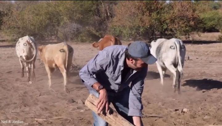 Австралійський еколог вважає, що коровам треба пара очей на дупі - фото 2