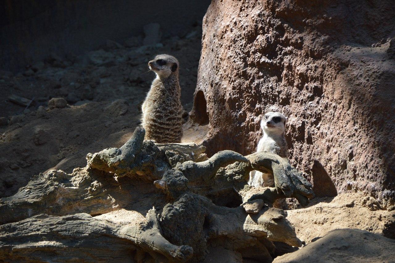 Як звірі у Миколаївському зоопарку поздоровляли городян з Днем міста - фото 6