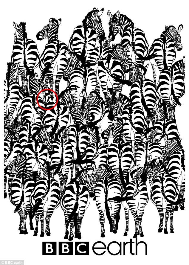Нова британська забавка: Знайдіть кота серед сміття, а борсука - серед зебр - фото 4