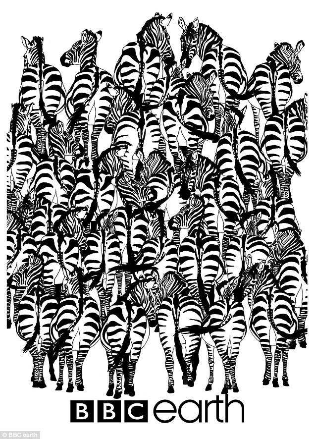 Нова британська забавка: Знайдіть кота серед сміття, а борсука - серед зебр - фото 3