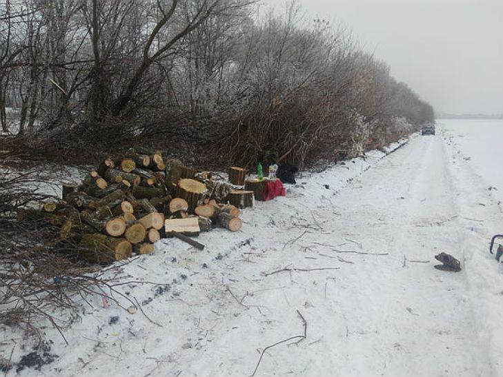 На Полтавщині місцеві жителі випилюють лісопосадки на дрова - фото 1
