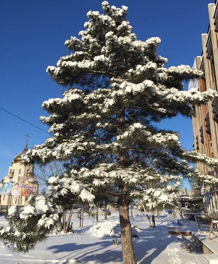 До Бердянська прийшла справжня зима  - фото 2