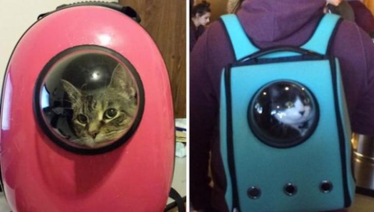 Завжди поруч: Китайці зробили рюкзак з ілюмінатором для прогулянок з котом - фото 2