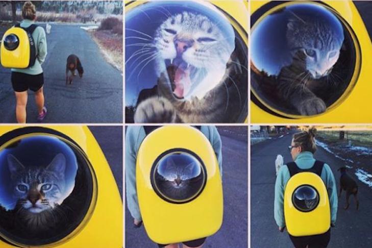Завжди поруч: Китайці зробили рюкзак з ілюмінатором для прогулянок з котом - фото 1
