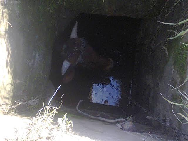 На Миколаївщині бик впав в триметровий колодязь