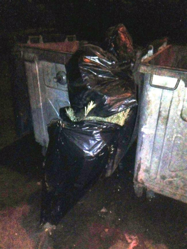 Мешканці Мелітополя продовжують викидати новорічні ялинки - фото 1
