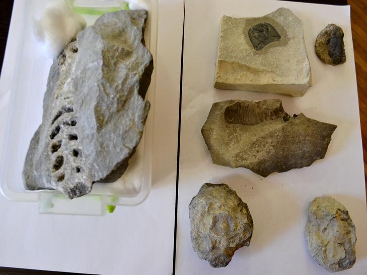 Вік порід, виявлених у Смотрицькому каньйоні, сягає 416 мільйонів років - фото 1