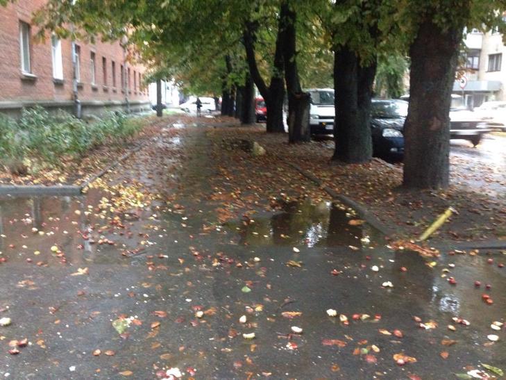 """У Хмельницькому вулиці покрилися """"каштановою"""" піною - фото 5"""