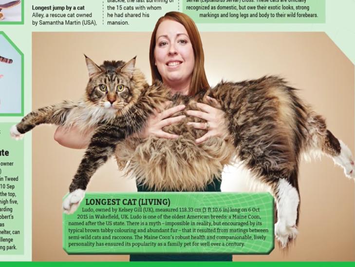 У Великобританії живе найдовша в світі кішка (ФОТО, ВІДЕО) - фото 1