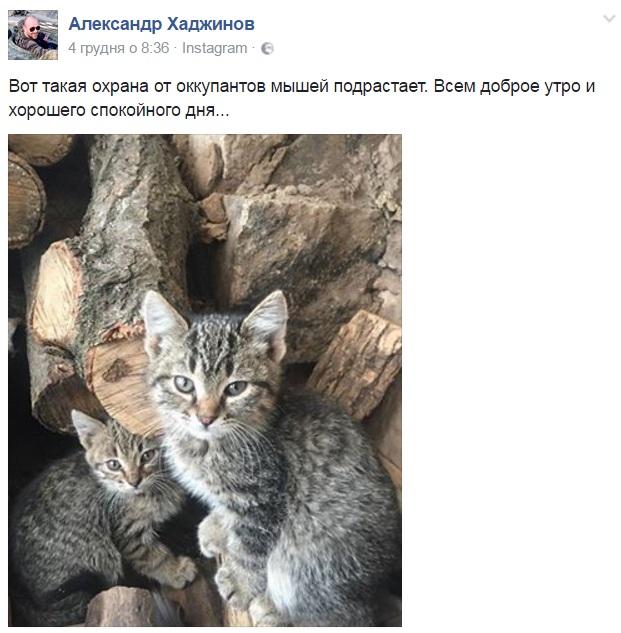 За що котам в АТО треба поставити пам'ятник-13 - фото 4