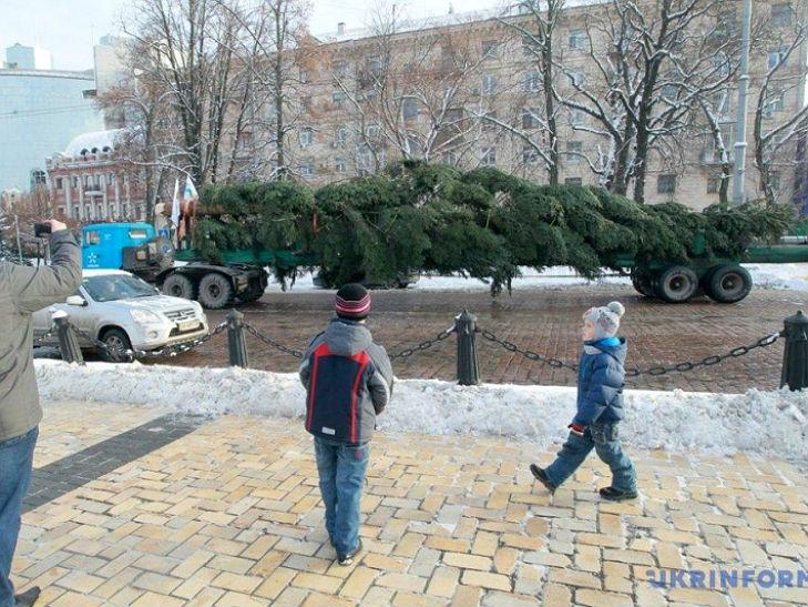 Вантажівка КрАЗ привезла головну ялинку країни до Києва - фото 1