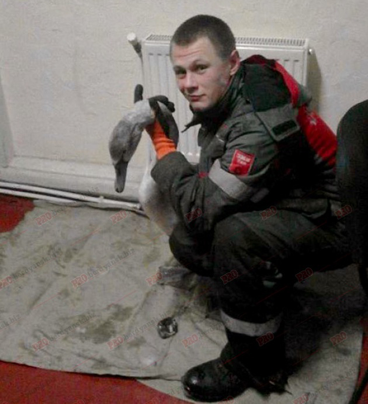 У Бердянську водолази врятували знесиленого лебедя - фото 1