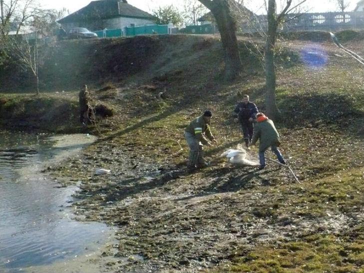 На Полтавщині врятували лебедя з крижаної пастки - фото 1