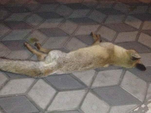 Мелітопольців налякала дохла лисиця у центрі міста - фото 2