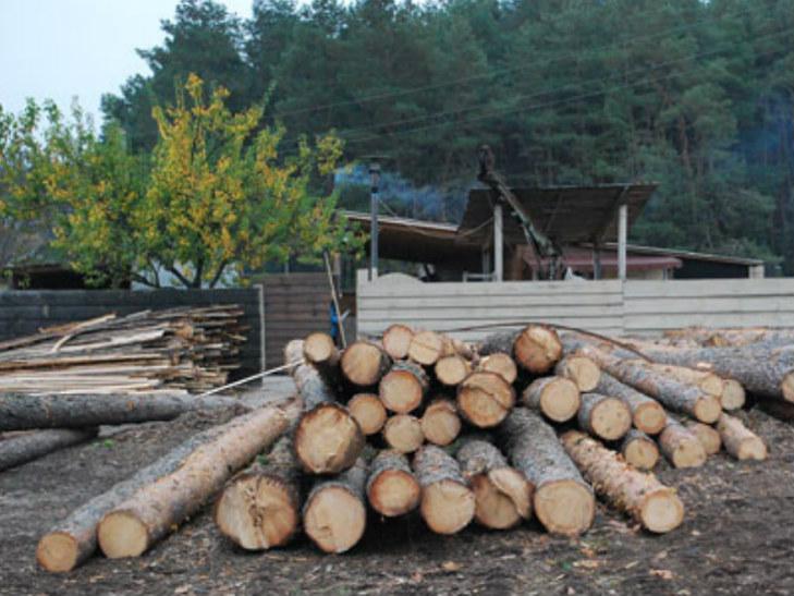 На Полтавщині затримали злочинців, які незаконно вирубували ліс - фото 2