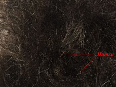 Знайдені у Глухівському лісі останки не належали Сергію Лихману, – висновок прокуратури - фото 1