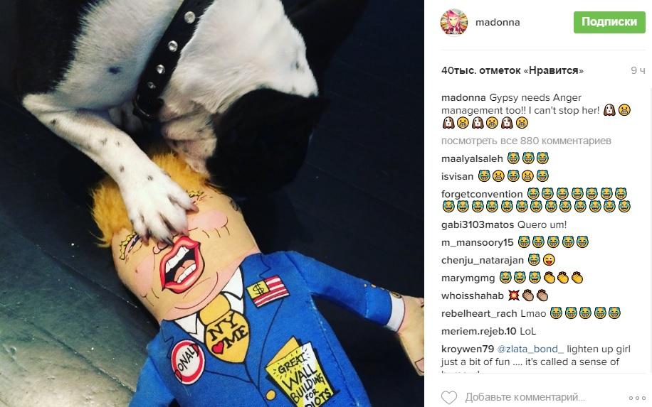 Песик Мадонни напав на Трампа - фото 1