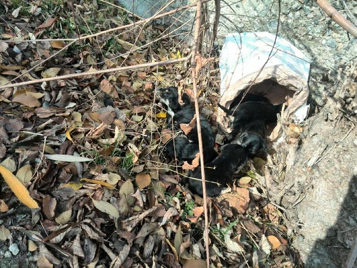 У Мелітополі врятували маленьких цуценят від смерті - фото 2