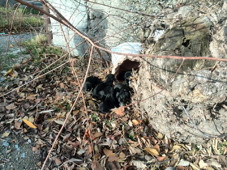 У Мелітополі врятували маленьких цуценят від смерті - фото 3