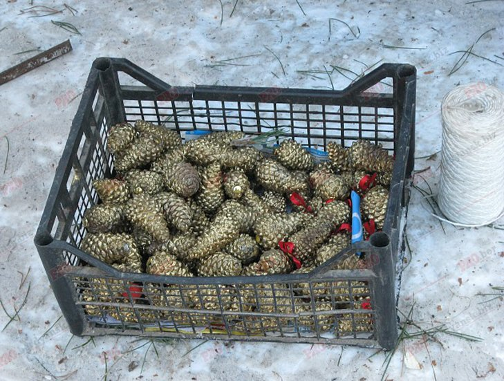 У Бердянську новорічні ялинки коштують від 70 гривень - фото 4