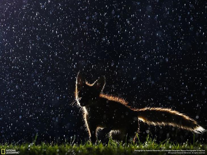 """Роботи фіналістів конкурсу National Geographic """"Кращий фотограф природи 2016"""" - фото 3"""