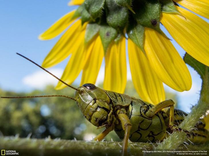 """Роботи фіналістів конкурсу National Geographic """"Кращий фотограф природи 2016"""" - фото 31"""