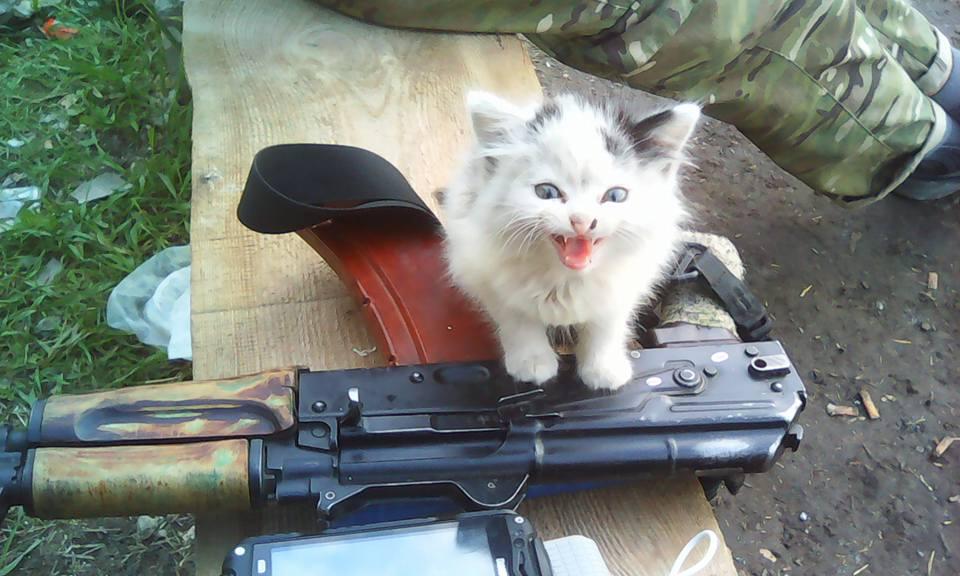 За що котам в АТО треба поставити пам'ятник-9 - фото 1