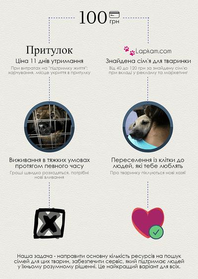 Вінницькі студенти створили систему онлайн-пошуку домашніх тварин у притулках  - фото 2