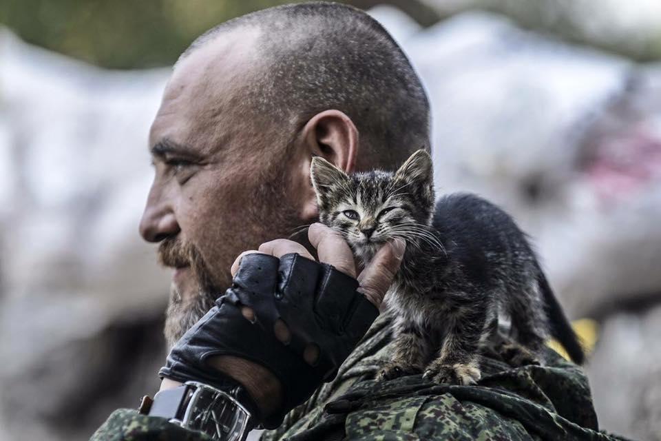 Коти в АТО: найкраще за 2016 рік - фото 10