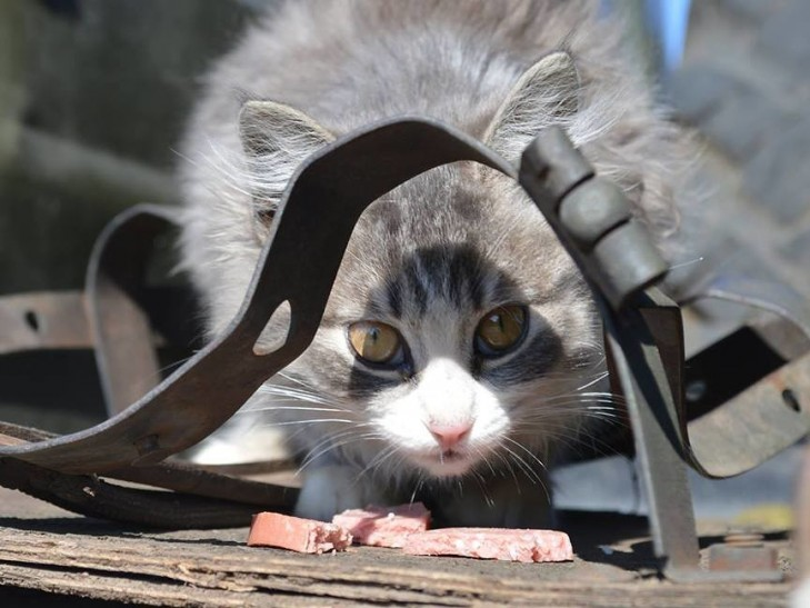 Коти в АТО: найкраще за 2016 рік - фото 14