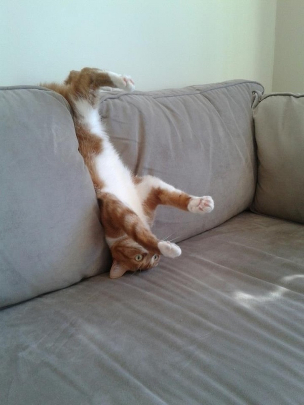 Картинка черти, смешные картинки лежу на диване