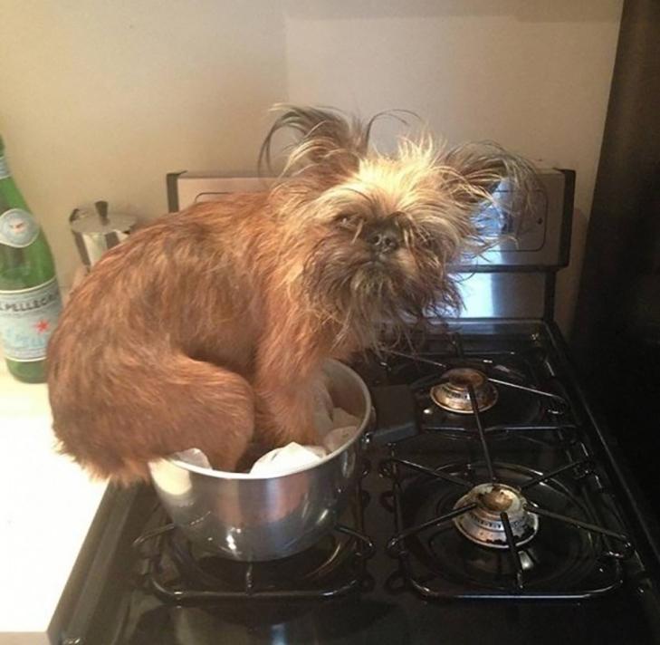 25 фото, чим зайняті собаки, коли господарів немає вдома - фото 9