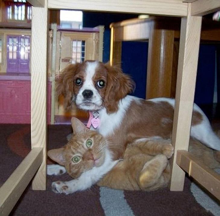25 фото, чим зайняті собаки, коли господарів немає вдома - фото 1