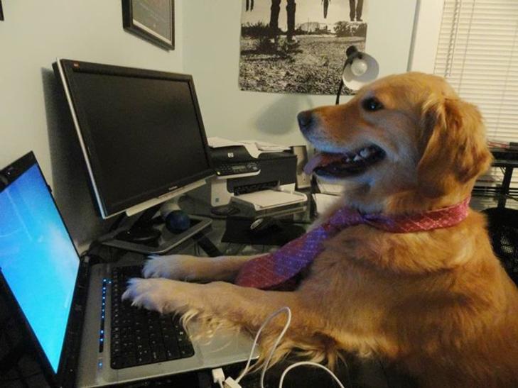 25 фото, чим зайняті собаки, коли господарів немає вдома - фото 19