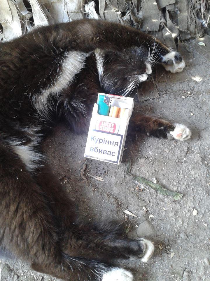 За що котам в АТО треба поставити пам'ятник-10 - фото 2