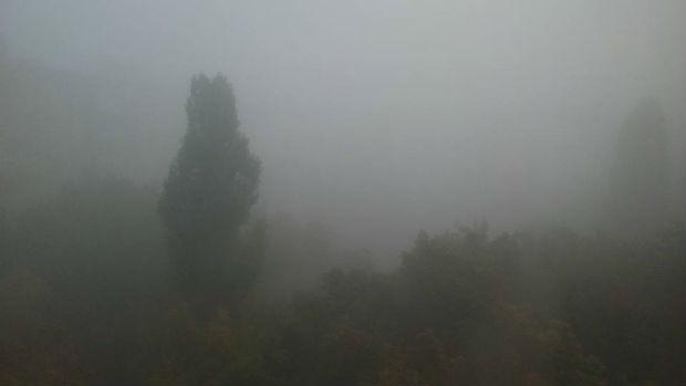Харків вкрив надзвичайно густий туман - фото 7