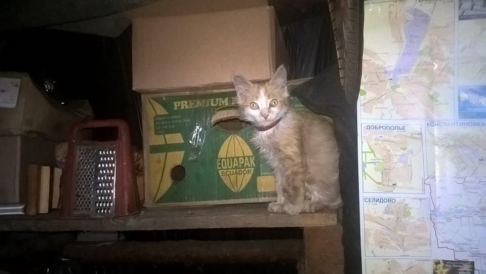 За що котам в АТО треба поставити пам'ятник-10 - фото 5