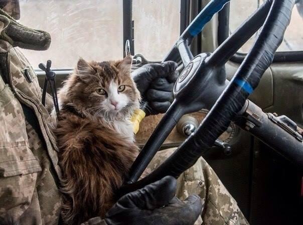Коти в АТО: найкраще за 2016 рік - фото 18