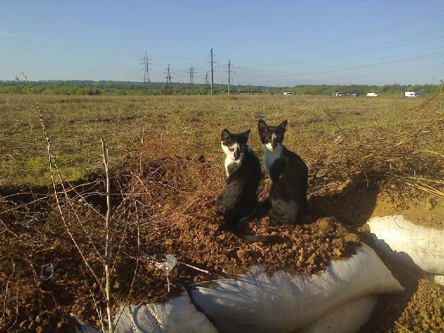 За що треба поставити пам'ятник котам в АТО - 11 - фото 8