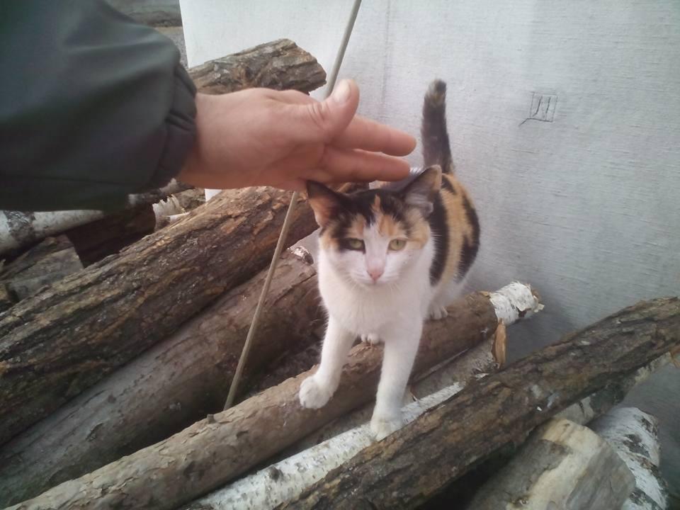 За що котам в АТО треба поставити пам'ятник-10 - фото 8