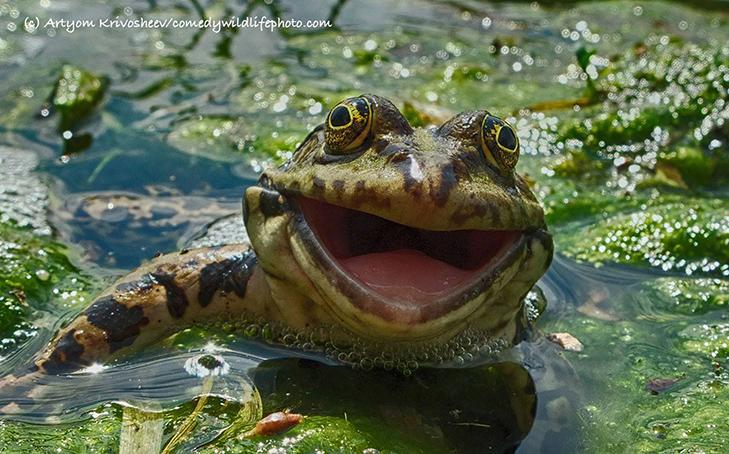 40 найсмішніших тварин з конкурсу Comedy Wildlife Photography Awards 2016 - фото 3