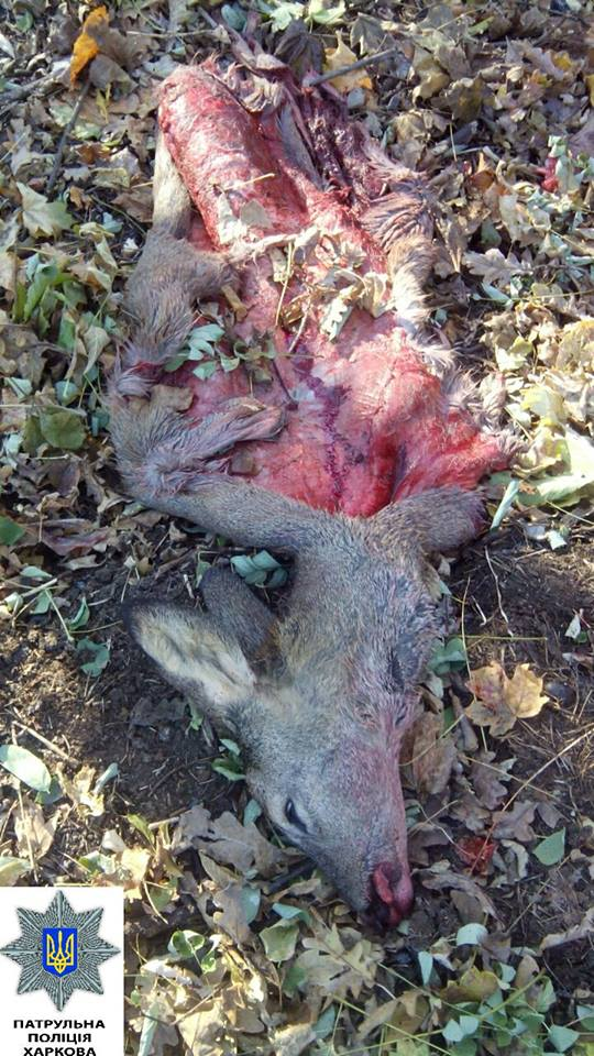 У Харкові виявили мішки з тушами диких тварин без внутрішніх органів (ФОТО 18+) - фото 2