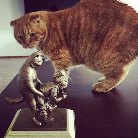 За що треба поставити пам'ятник котам в АТО - 11 - фото 10