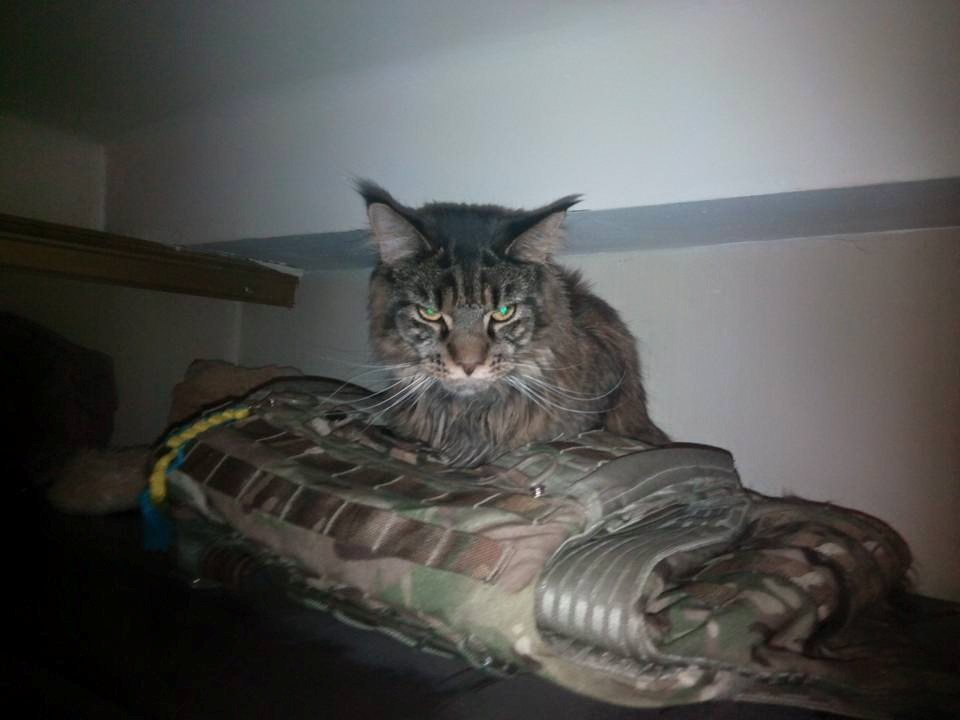 За що треба поставити пам'ятник котам в АТО - 11 - фото 1