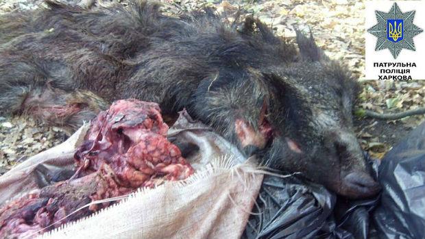 У Харкові виявили мішки з тушами диких тварин без внутрішніх органів (ФОТО 18+) - фото 1