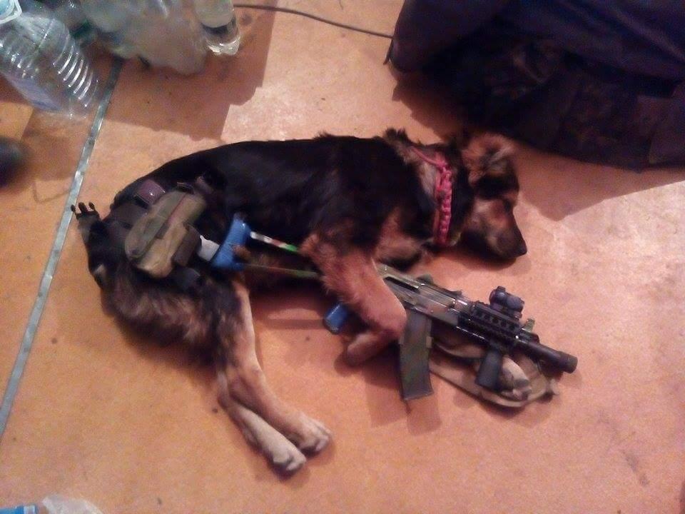Чим займаються на Донбасі найкращі друзі бійців АТО - 9 - фото 2